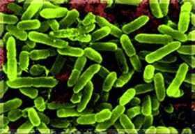 """Probiotikumokkal pótolhatóak az elveszett """" jó baktériumok"""" www.nutrilab.hu"""