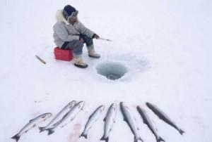 grönland halász